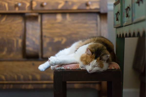 calico cat sleeping on a bench