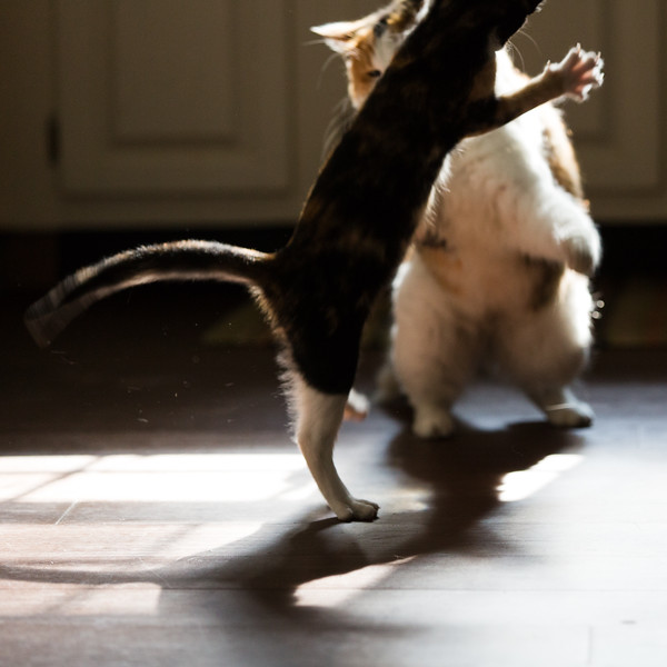 Cats playing in the sunlight