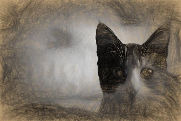 Cat | Topaz Labs | Impression | Da Vinci Sketch
