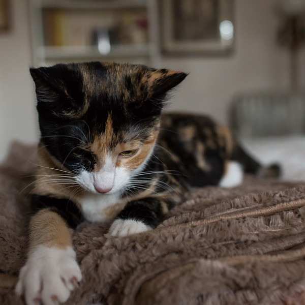 Cat on the bed