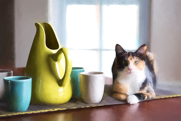 Cat with Russel Wright Pottery