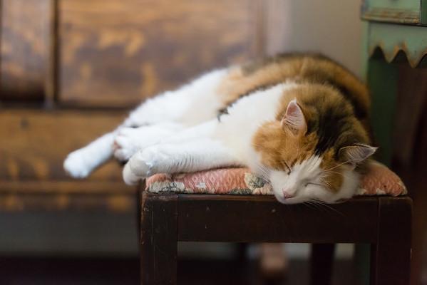 Calico cat sleeping on antique bench