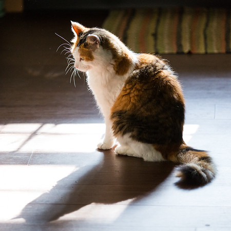 Cat sitting in the sunlight