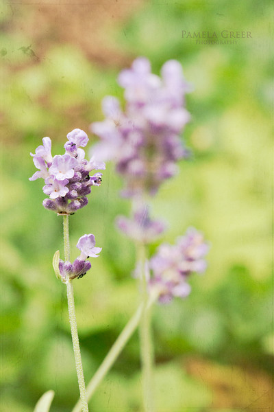 Textured Lavender