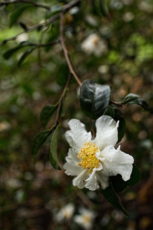 White Flower Yellow Center | Pamela Greer 365