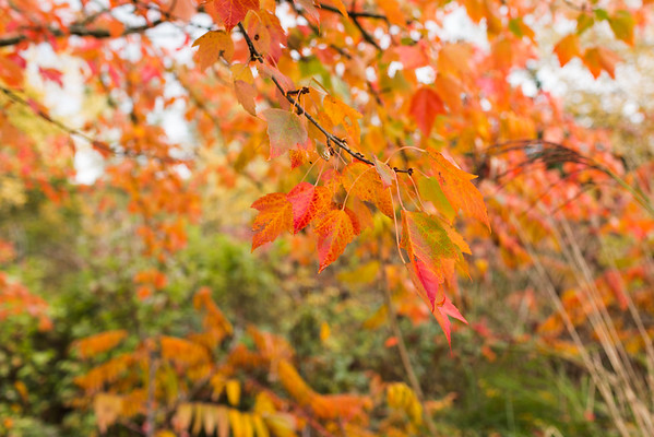 Fall Colors Chateau St. Michelle Vineyards